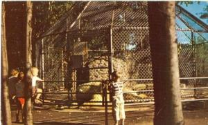 Canada, White Bears Cage, Granby, Quebec 1960 used Postcard