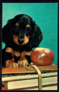 Willing Pupil,Dog,Apple,Books