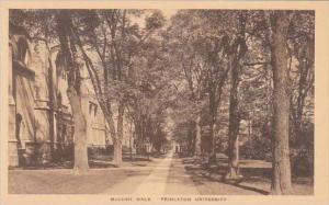 New Jersey Princeton Mccosh Walk Princeton Univers Albertype