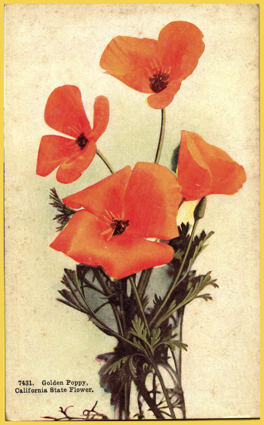 The Golden Poppy California State Flower Hippostcard