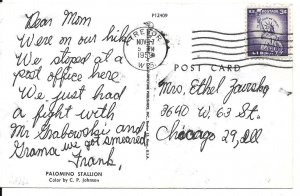 Palomino Stallion Rock Lake Trevor Kenosha Co Wisconsin Postcard   PC108-6521