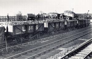 Nostalgia Postcard 1934 Northamptonshire Sugar Beat Loaded to Railway Wagons NS9