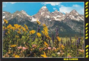 Wyoming Grand Teton Wild Flowers Grand Teton National Park