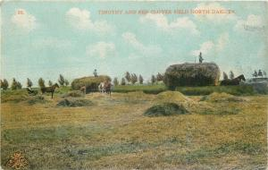 Brandon? North Dakota~Timothy and Red Clover Field Farming with Horses~1910