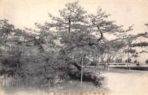 Japan  Sacred Tree