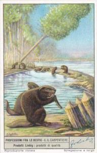 Liebig Trade Card S1519 Occupations For Animals No 6 Il Carpentiere