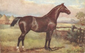 Harry Payne. English Hunter Hotse Tuck Oiletyte Horse Studies Ser. PC # 9138