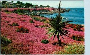 Lover's Point Pacific Grove Ice Plant Magic Carpet California Postcard