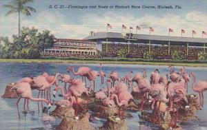 Florida Hialeah Flamingos And Nests At Hialeah Race Course 1949