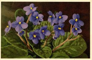 Flowers -   Usambara                            (Thor & Gyger #1082)