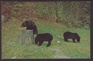 Three Black Bears Postcard BIN