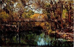 Postcard Picturesque Suspension Bridge Hillsborough River State Park FL  1581
