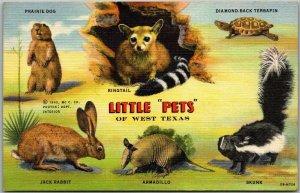 Vintage 1940s Texas Postcard LITTLE PETS OF WEST TEXAS Skunk Armadillo Linen