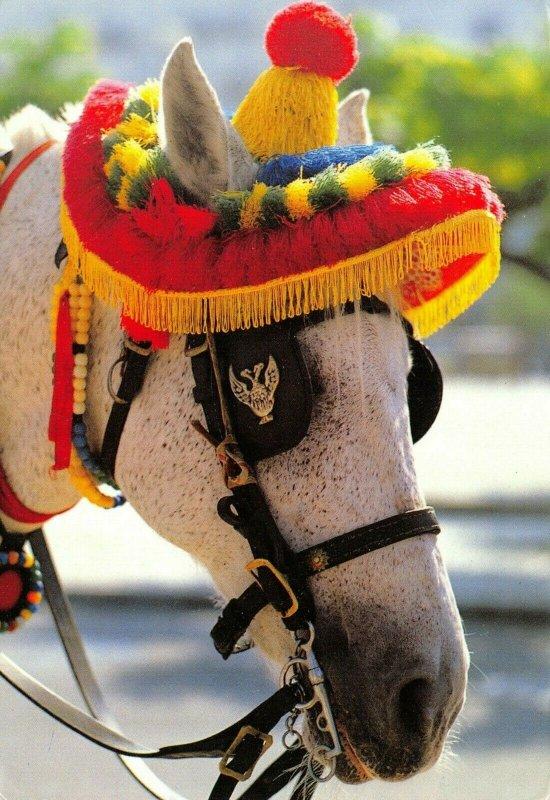 Greece Postcard, Donkey, Mule wearing Sombrero FK2
