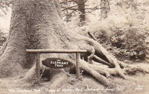 The Elephant Tree Trees Of Mystery Park Redwood Highway California Real Photo