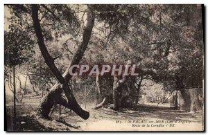 Old Postcard Tree St Palais sur Mer Corniche Road