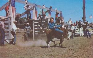 Belle Fourche,Calf riding by junior cowboys, Black Hills, Round-Up,South Dako...