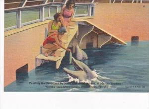 Florida Marineland Feeding The Porpoises By Hand