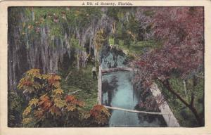 A Bit of Scenery, Florida,00-10s