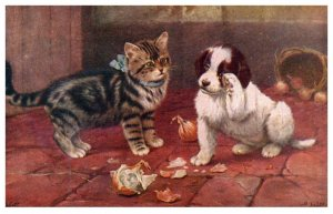 Dog ,  Spaniel puppy and cat