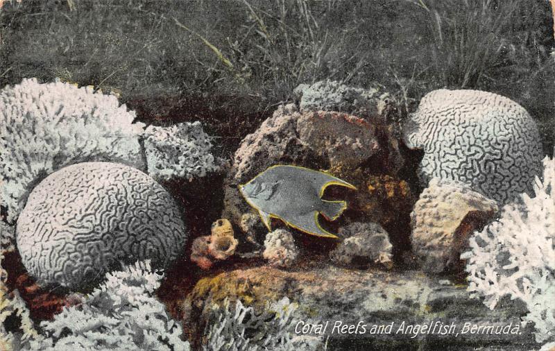 Coral Reefs and Angelfish, Bermuda, Early Postcard, Unused