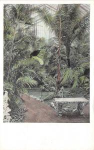 St Louis MO~Missouri Botanical Garden~Palms in Palm House~Stone Bench~1920s Pc