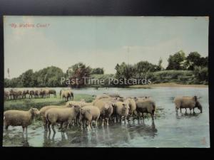 SHEEP by Waters Cool HILL & DALE Old Postcard by Raphael Tuck & Son No.8083