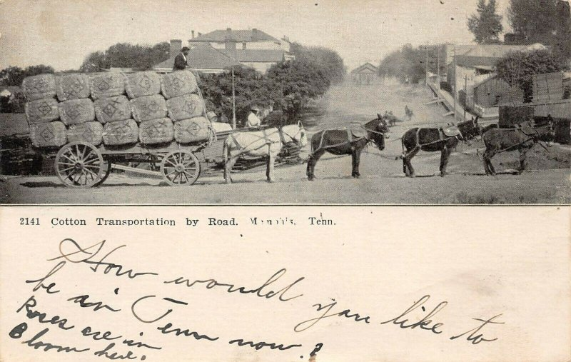 LP32 Cotton  Memphis   Tennessee Postcard Transportation by Wagon