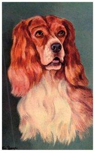 Dog  , Cocker Spaniel ,artist signed Wm.George