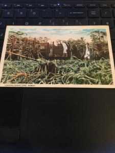 Vintage Postcard - Loading Sugar Cane Hawaii