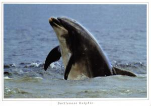 Postcard Bottlenose Dolphin native to Scotland by Ronald W Weir Photography D90