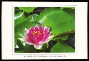 Waterlily & Gragonfly, Bernalillo