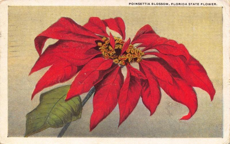 Vintage 1921 Postcard Poinsettia Blossom, Florida State Flower USA