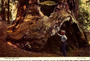 California Sequoia National Park The Chief Sequoia Tree