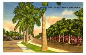 FL - Royal Palm Lined Drive