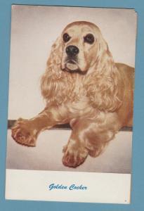 Golden Cocker Spaniel Dog Vintage Postcard