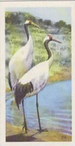 Brooke Bond Tea Vintage Trade Card Wildlife In Danger No 32 Manchurian Or Jap...
