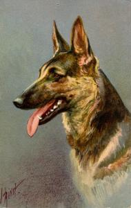 Dog - Alsatian Wolfhound. Artist: I. Rivst