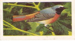 Trade Cards Brooke Bond Wild Birds in Britain No10 Redstart