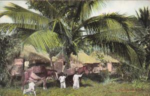 Puerto Rico Native Family With Huts Under Sheltering Palm