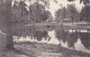 Washington DC The Lake And Geese U S Soldiers Home Albertype