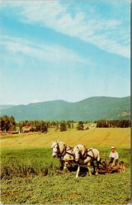 Farmer Working Farmland Agriculture White Horses (Tofield AB back) Postcard F3