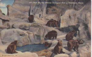 Illinois Chicago Bear Pit Chicago Zoological Park At Brookfield Curteich