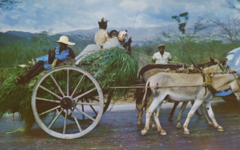 Jamaica Homeward Bound People Mules Wagon L. Van McClure Unused Postcard D15