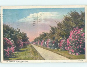 W-border FLOWERS ALONG OLEANDER AVENUE California City by Bakersfield CA AD7027