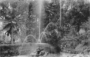 Guinea Conakry Public Garden 1906 Postcard