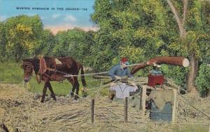 Arkansas Making Sorghum In The Ozarks 1956