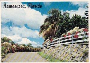 Florida Homosassa The Gulf Coast Of Florida