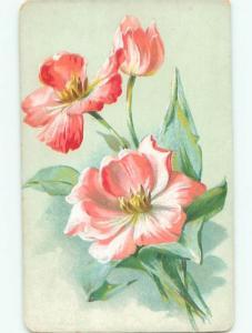 Divided-Back BEAUTIFUL FLOWERS SCENE Great Postcard AA3804