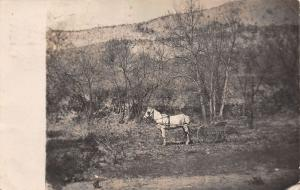 Salem Oregon~Bessie: Does This White Horse & Buggy Look Natural?~1910 RPPC